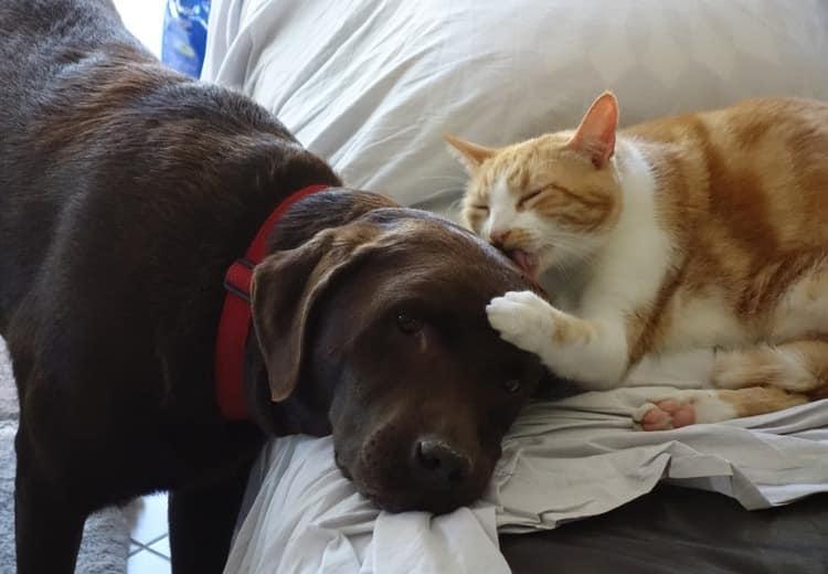 Gutes Kaltgepresstes Hundefutter