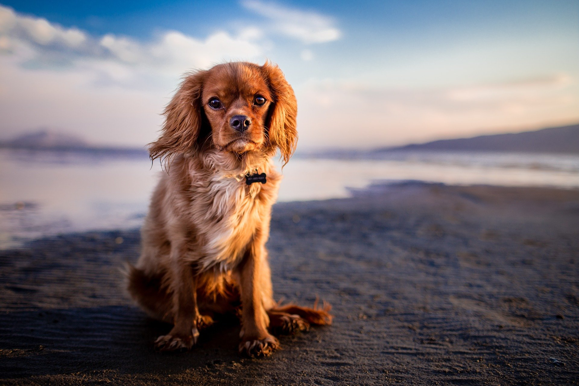 Kaltgepresstes Hundefutter für einen gesunden Hund