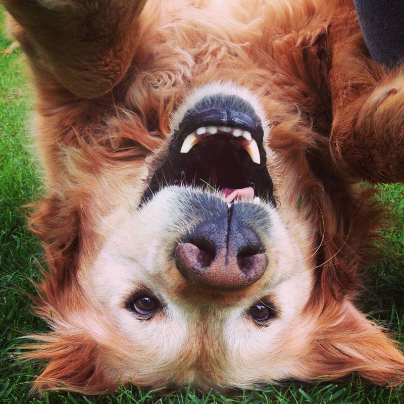 RAW-Nature©--Hund